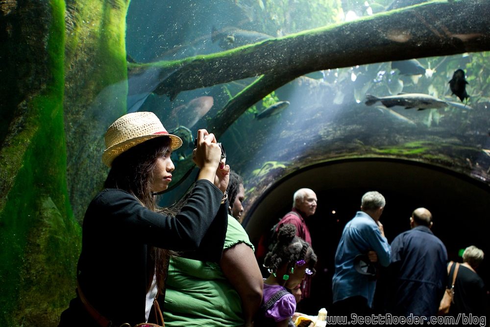 Field Trip To The California Academy Of Science Steinhart